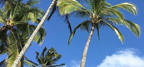 palmbomen lucht